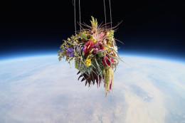 Azuma-Makoto-sends-flowers-into-space-designboom02